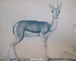 تصویر یک آهو «آبرنگ» احتمالا کار ابوالحسن غفاری «قرن 13 هجری»