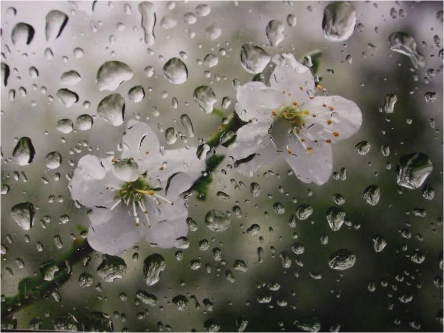 بهار اشک